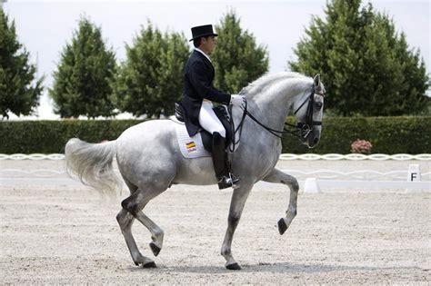 horses dressage horse andalusian pretty fuego spanish breed pure breeds xii cowboy piaffe dance arabian