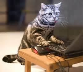 typing cat vs cat diary