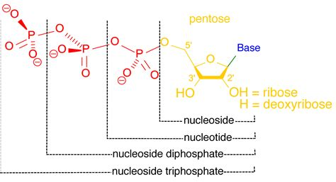 Nucleoside/nucleotide Analysis Service