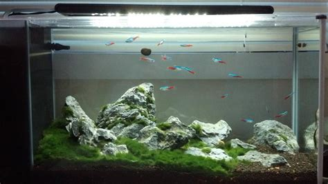 Fluval Spec Aquascape by Excellent Use Of A Fluval Spec V Iwagumi Marino Moss