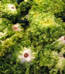 Endiviensalat Pflanzen Setzen : endiviensalat endivien salat mit kartoffeln untereinander lebe liebe ~ Whattoseeinmadrid.com Haus und Dekorationen