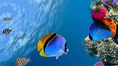 Under Fish Water Coral 4k Ocean Sea