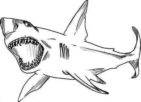 San Jose Sharks Coloring Pages Learny Kids