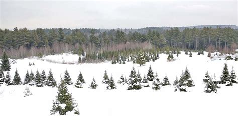 28 best cut your own christmas tree nh cut your own