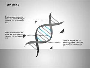 Dna Strand Diagram For Powerpoint