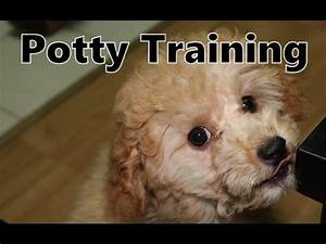 poodle potty training with the puppy apartment how to With potty train your dog fast
