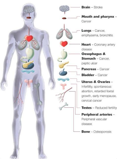 body diagram templates sample  format