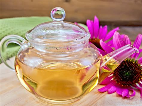 Tea Tip 3 Reasons To Drink Echinacea Tea Enabled Kids
