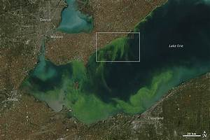 See Toxic algae bloom in Lake Erie from space   Earth ...