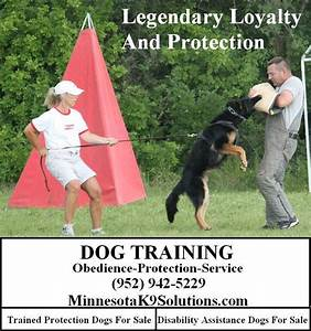 dog training testimonials minnesota dog training minnesota With dog training mn