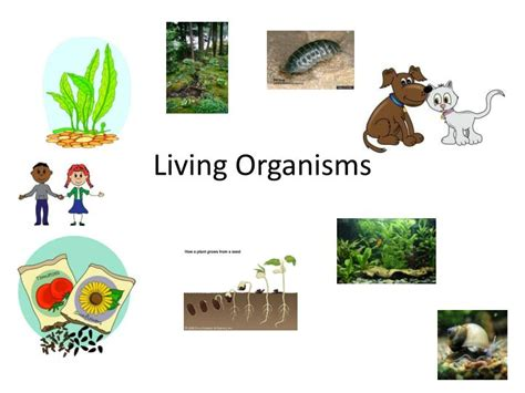 ppt living organisms powerpoint presentation id 2125773