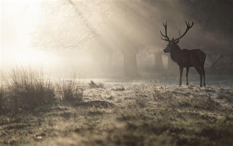 deer hd wallpapers free download