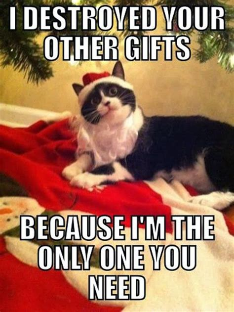 Christmas Animal Meme - 20 funniest merry christmas memes sayingimages com