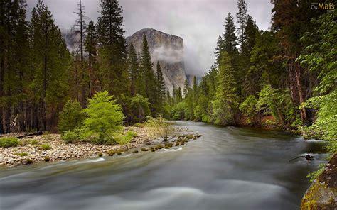 Papel De Parede Riacho Na Floresta