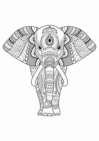 Elephant Coloring Pages Elephants Patterns Simple Adult