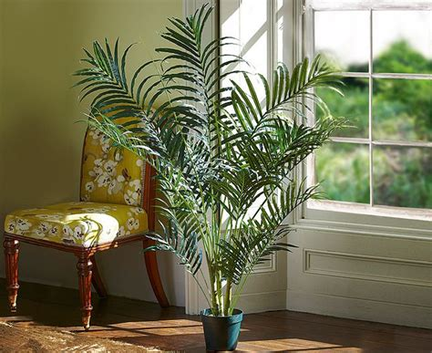 easy  grow indoor plants  india interior design ideas
