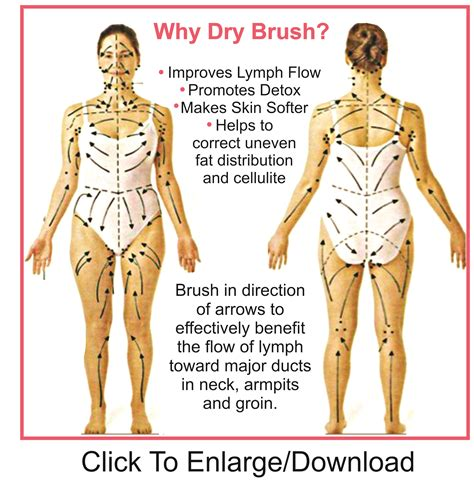 The Lymph System Breastresearchawarenesscom