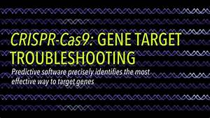 Troubleshooting The Gene Targeting Process