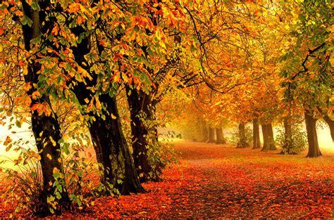 Autumn Wallpaper by Wallpaper Autumn Park Forest Leaves 4k Nature 588