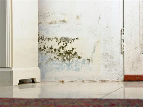 Black Mold What You Should Know Hgtv