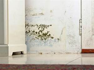 Common types of mold in homes home remodeling ideas for How to get mould off bathroom walls