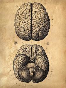 Vintage Anatomy Brains Print  Human Body  Zombies Horror
