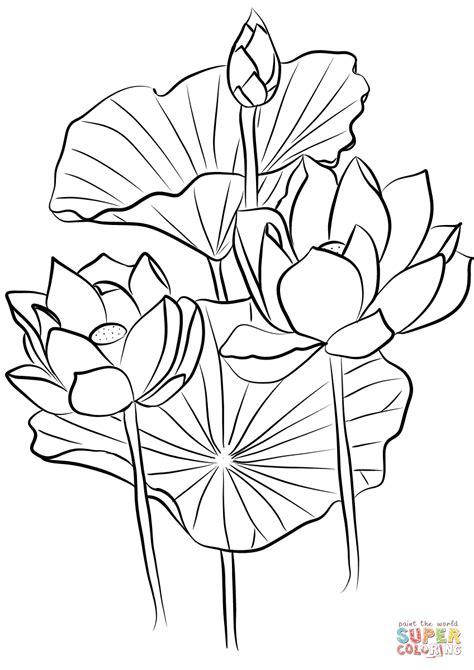 Sacred Lotus (Nelumbo nucifera) coloring page | Free