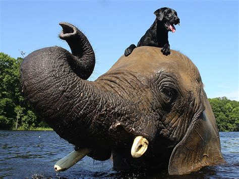 it s national elephant appreciation day 7 reasons to them today