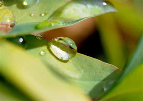 tips  improve  nature macro photography
