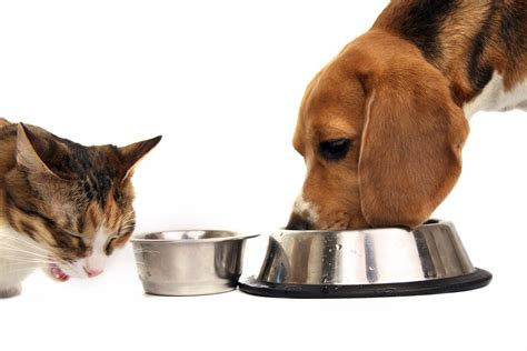 whats   amount  food  prevent obesity   pet