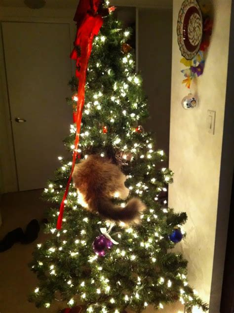 gatos ayudando  decorar el arbol de navidad bored panda