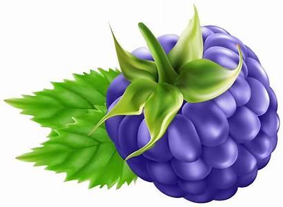 Blackberry Clip Clipart Transparent Fruit Disney Yopriceville