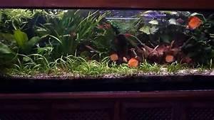 Planted Discus Aquarium Set Up - 400l