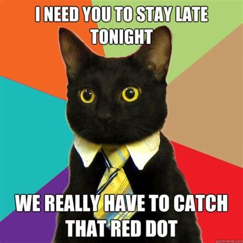 Buisness Cat Meme - business cat meme you just have to laugh sometimes pinterest