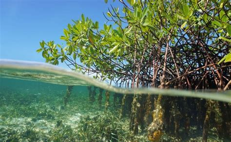 top  sites  mangrove diving deeperbluecom