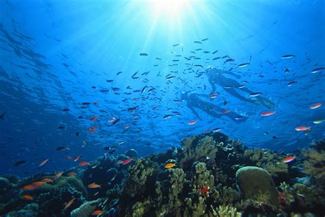 Australias Great Barrier Reef Is Home To Unique Marine