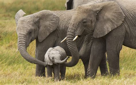 cute baby elephant wallpapers hd disney elephant