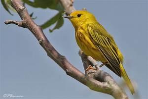 Oiseau Jaune Et Bleu : quelques liens utiles ~ Melissatoandfro.com Idées de Décoration