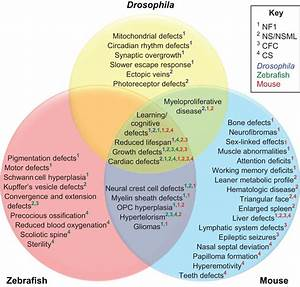 Rasopathies  Unraveling Mechanisms With Animal Models