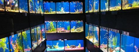 how to store fish pet fish store the fish tanks inside pet supermarket in the brentwood place shopping 2017