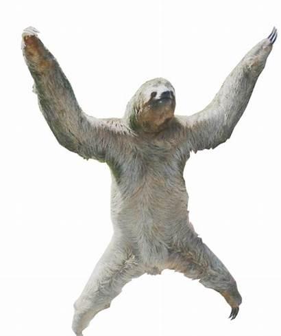 Sloth Transparent Background Sloths Clipart Oc Idk