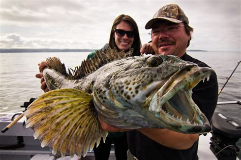 Charter Boat Fishing Washington State by Seattle Fishing Charter Adventure Charters