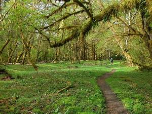 Free Images : landscape, tree, wilderness, trail, bridge ...