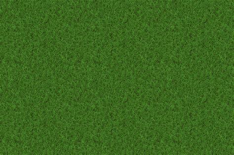 Plant, Field, Lawn, Meadow, Texture, Pattern