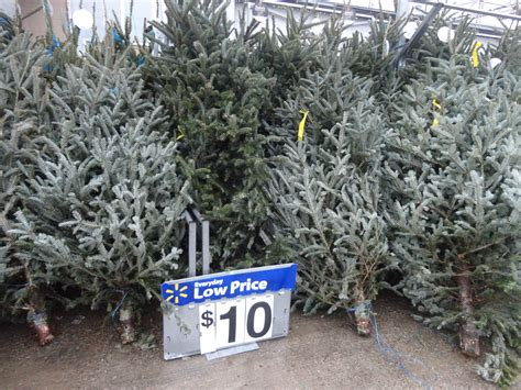 where to get best live tree prices any size tree real 10 walmart ship saves