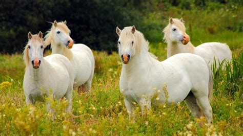What is a group of horses called? | Reference.com