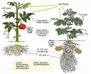 Feed The Plant Fertilizer