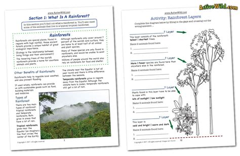 tropical rainforest worksheets worksheets autos post