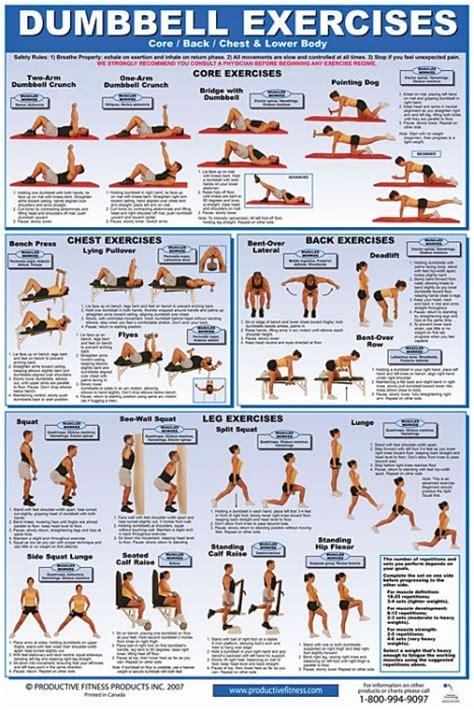 Dumbbell Core, Chest, Back & Lower Body Exercise Poster ...