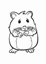 Coloring Pets Pages Hamster Pet Cute Zhu Printable Print Drawing Rat Few Clipartmag Line sketch template